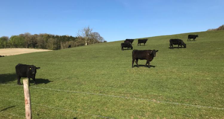 Spring has sprung on the Farm